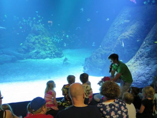 Aquariums 12