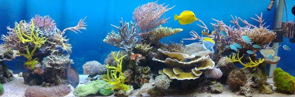 Aquariums 13