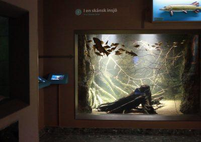 Aquariums 17