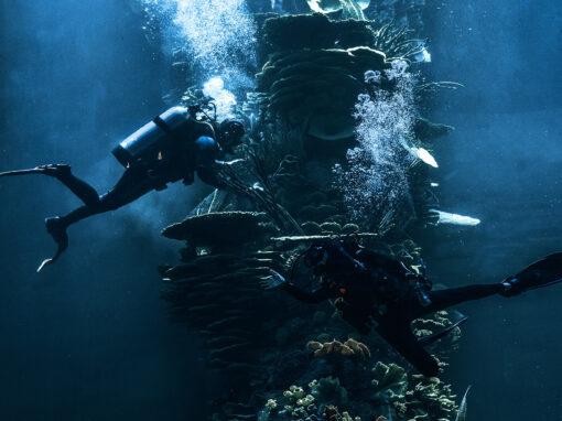 Aquariums 20