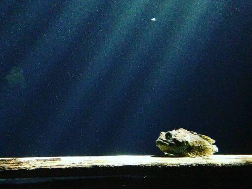 Aquariums 25