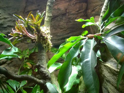 Zoo and Tropicarium 13